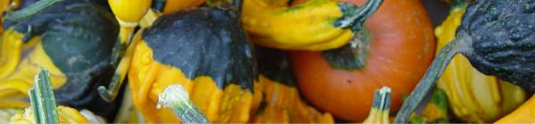 City of Lake Oswego Farmers Market squash
